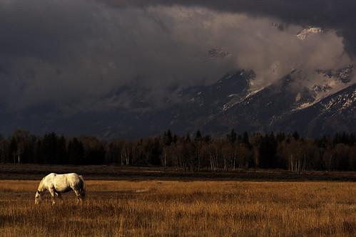 Grand Teton Wild Horse