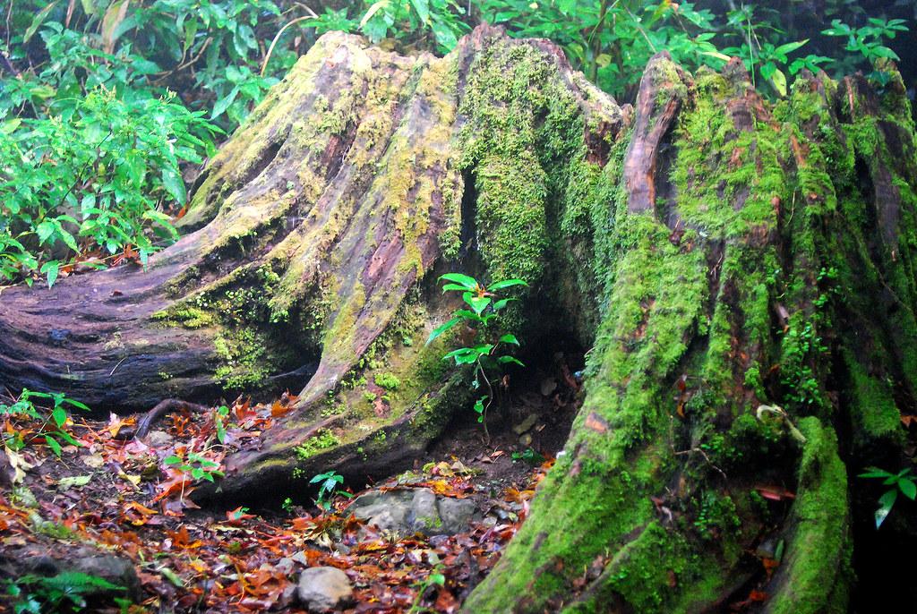 美麗的樹根