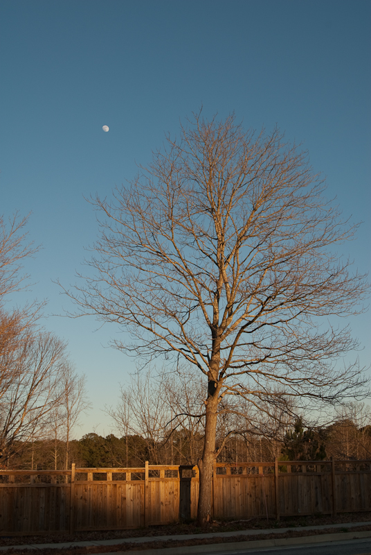 Day 80: Tree and Moon