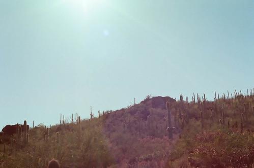 saguaro-49020008
