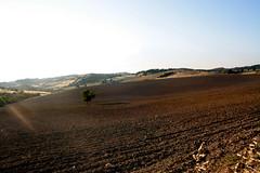 Tuscany (Elisa Pioppi) Tags: sunset italy tree field landscape italia tramonto tuscany campo toscana albero paesaggio elisa pioppi elisalisae