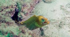 Moray Eel (Corey Hamilton) Tags: bareisland morayeel scubadiving underwater