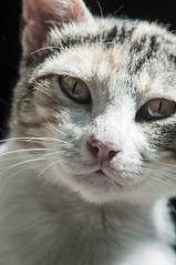 Miradas (Cromática Studios) Tags: mochitlan guerrero mochitlanweb gato mexico