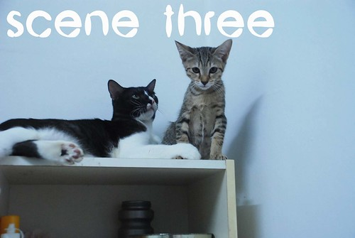 scene three