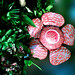 Rafflesia schadenbergiana goppert