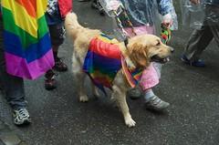 Hund mit Regenbogenfahne