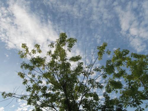 365 - bright sky