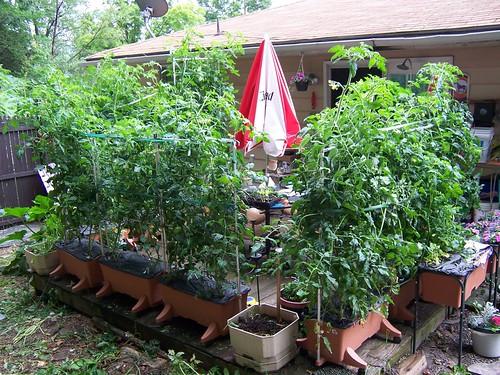 City Pickers Patio Garden Kit Instructions