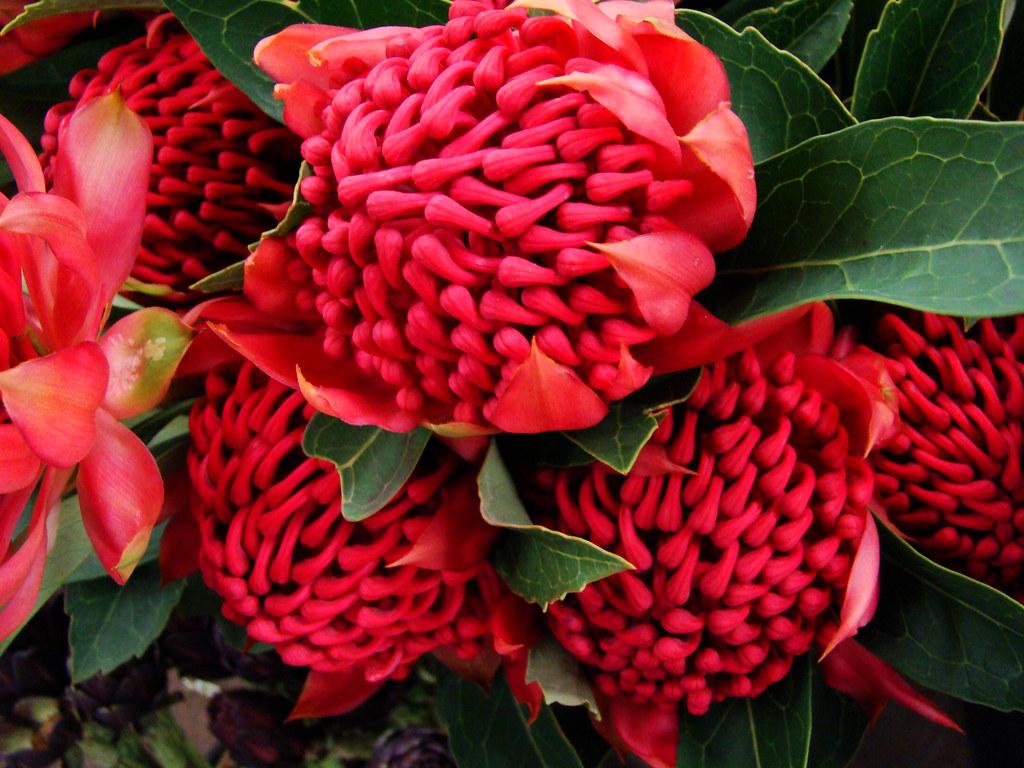Unique Flowers And Decor