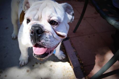 John's dog, Fred