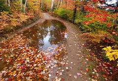 After the Rain (reflectionsofthenorth) Tags: autumn ontario nature landscape fallcolors olympus northernontario naturephotography fallcolours ontarionature autumninontario fallinontario reflectionsofthenorth onapinglake fallcoloursinontario autumncoloursinontario