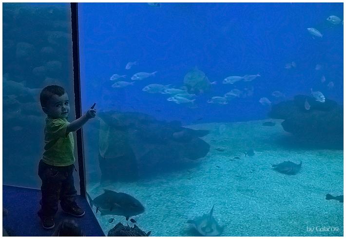 Pere Aquarium Palma