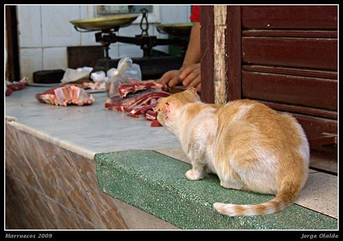 Gatito tiene hambre (Fez, Marruecos)