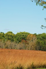 Fall Field (chumlee10) Tags: park fall nature colors cherry outdoors illinois sony il springs valley blackhawk a300 winnebagocounty