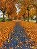 Some more Autumn colors... (i.rashid007) Tags: uk autumn fall manchester autumncolors levenshulme cringlefieldspark autumncontinues