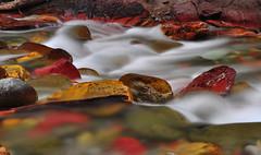 Colored Rocks in a Stream