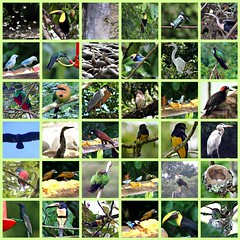 Birds of Costa Rica, Picnik collage