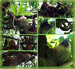 Sloths of Costa Rica, Picnik collage
