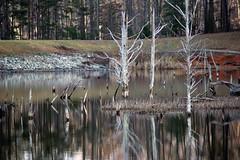 Lost bobbler - 3 (Stephen Little) Tags: minoltaaf70210mmf4 curtismemorialpark thelostbobblerseries jstephenlittlejr