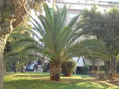 Photo taken with Sony Ericsson Satio