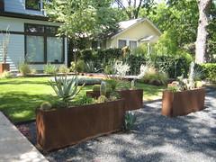 Cacti & metal planters