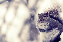 freezing his nuts off (dawn frary) Tags: winter snow cute vintage woodland outside rodent squirrel critter retro brrr fauxvintage retrocolors