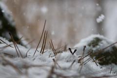 Snow Studies 2