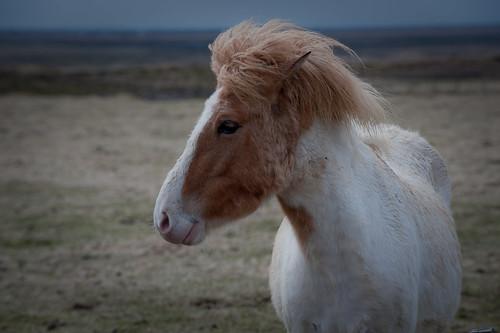 Iceland - Icelanic beauty