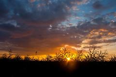 Going West (Rutger Blom) Tags: sunset sky sun sunlight sol public clouds evening skåne zonsondergang europa europe sweden skandinavien silhouettes himmel wolken sverige avond lucht scandinavia zon hemel scania zonlicht zweden solnedgång moln skane kväll kvll staffanstorp solljus skne solnedgng skanelan
