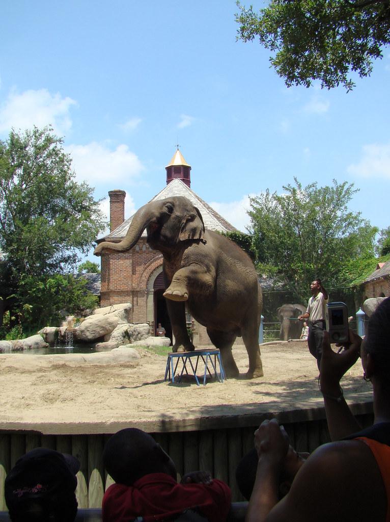 DSC06450 elephant Audubon Zoo