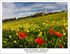 Poppies field at Pienza (Salva del Saz) Tags: red italy church canon eos spring italia raw val filter lee single tuscany poppy poppies toscana dorcia naturallook 40d salvadordelsaz salvadelsaz 06gnd
