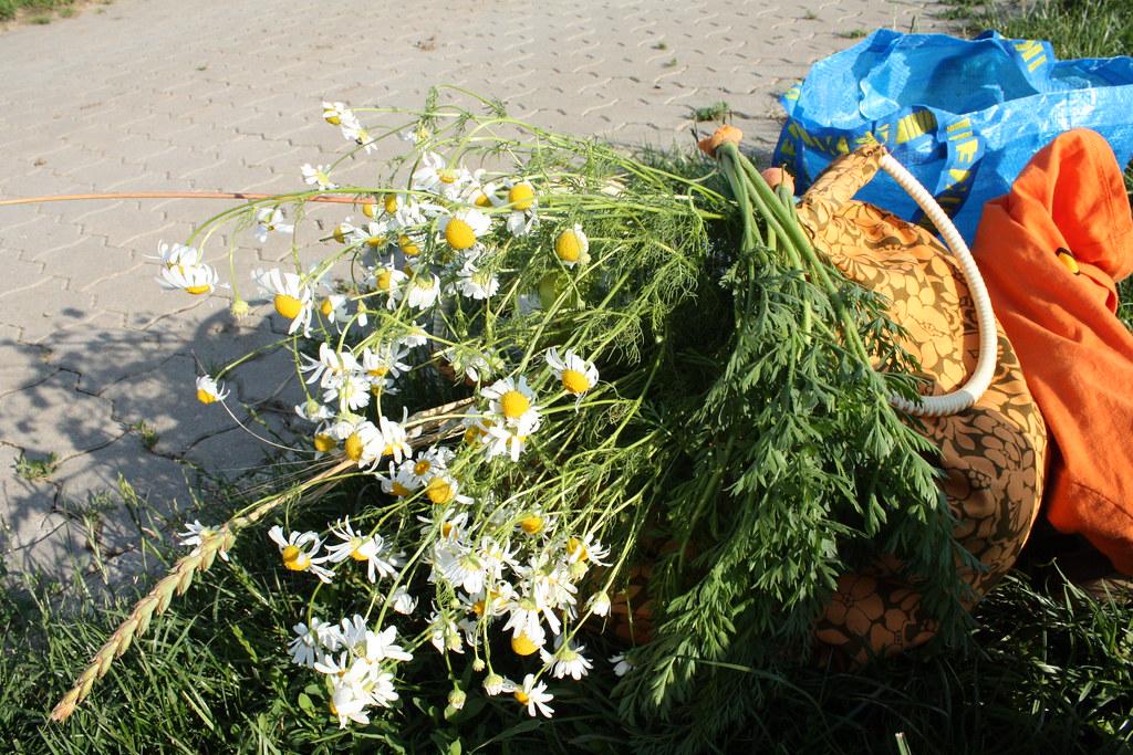 Sommer Blumen für zuhause