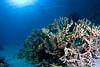 The Silence (Lea's UW Photography) Tags: underwater redsea fisheye fins hardcoral tokina1017mm unterwasserfoto leamoser