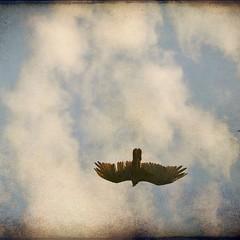 Faded Sky (kellyhughes1970) Tags: sky ontario bird texture burlington digital nikon faded worn layers vulture niagaraescarpment mountnemo d80 skeletalmess