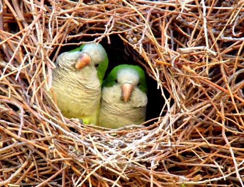 3810452307 34d357f40c Beautiful Birds   The Splash of Colors!!!