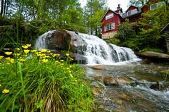 Mill Shoals Falls (Walter Arnold Photography) Tags: county flowers mill water grass french geotagged waterfall nc nikon north sigma falls carolina transylvania broad 1020 geotag shoals wnc d300 thedigitalmiragecom