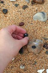 11 September 2009 (Copperhobnob) Tags: shells beach sand hand aberdeenshire stones stcombsbeach