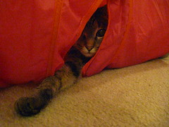 Maggie spying through the hole in the tunnel