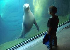 "El Paso Zoo - ""Sushi"" 101 (danimaniacs) Tags: blue green water animal zoo child seal elpaso mywinners mywinner anawesomeshot anawsomeshot awsomeshotaward gününeniyisithebestofday damniwishidtakenthat"