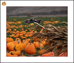 Pumpkin Farm (janetfo747 Back on Sunday) Tags: california autumn orange fall field truck pumpkin halfmoonbay soe picnik pumpkinfarm digitalcameraclub flickrsilver abigfave superaplus aplusphoto flickrbronze theunforgettablepictures platinumhearts yourarthastouchedtheworld universalelite artofimages betterthangood5 andromeda50 diamantefotosatuestilo bestcapturesaoi dragonflyawardsgroup5 fotosconestilo5 tripleniceshot mygearandme mygearandmepremium