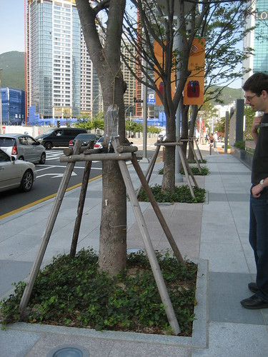Tree on a drip in Busan