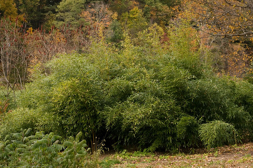 Edible Forest Gardens: bamboo