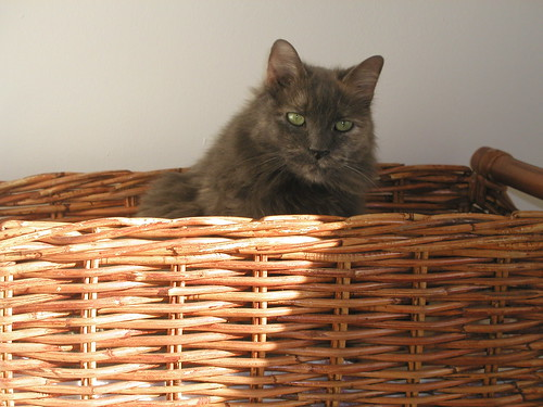 Basket Kitty 002