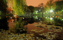 Boston reflected in the Public Garden Lagoon at night (Chris Devers) Tags: autumn light favorite reflection tree