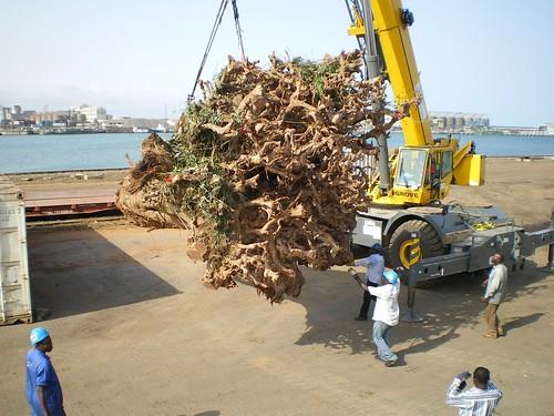 Unloading the Denya