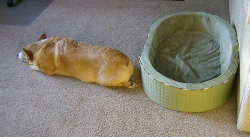 Corgi's bed - corgi = ???