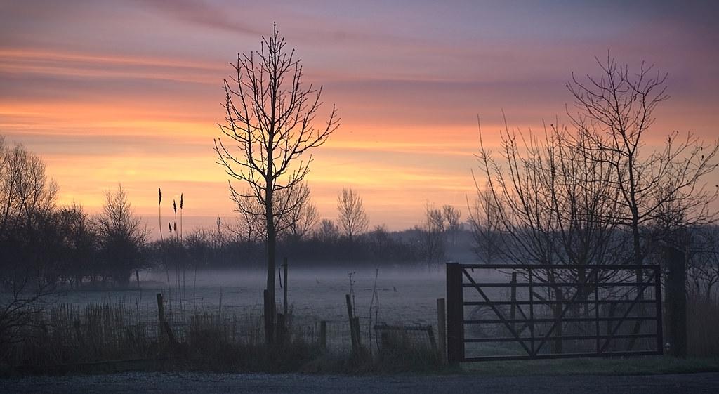 Weiland Dawn