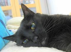 154-May'09 (Silvia Inacio) Tags: cats cat blackcat gatos gata boneca