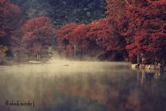 Sereno Macho (Eduardo Muriedas) Tags: autumn trees usa naturaleza fall nature rio fog canon river eos rboles texas foggy pines rbol otoo pinos hillcountry neblina pino niebla guadaluperiver densefog 40d mywinners canoneos40d canon40d top20texas bestoftexas eduardomuriedas yourwonderland