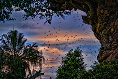 Birds Fly (~Life by the Drop~) Tags: park vacation tourism animal wonder photography orlando nikon florida getaway magic dream ak kingdom tourist disney special professional disneyworld dreams theme destination fullframe nikkor waltdisneyworld akl fx magical attraction disneysanimalkingdom waltdisney dvc scl orlandoflorida disneyanimalkingdom gdad wheredreamscometrue orlandothemepark disneythemepark yearofamilliondreams d700 waltdisneyworldorlando pixelmania nikond700 wherethemagiclives disneypassholder disneyyourway disneyzoo